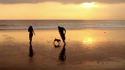 man dog and beach