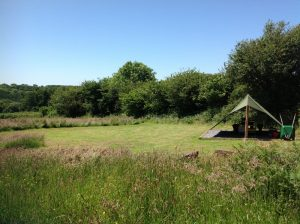 dandelion camping area